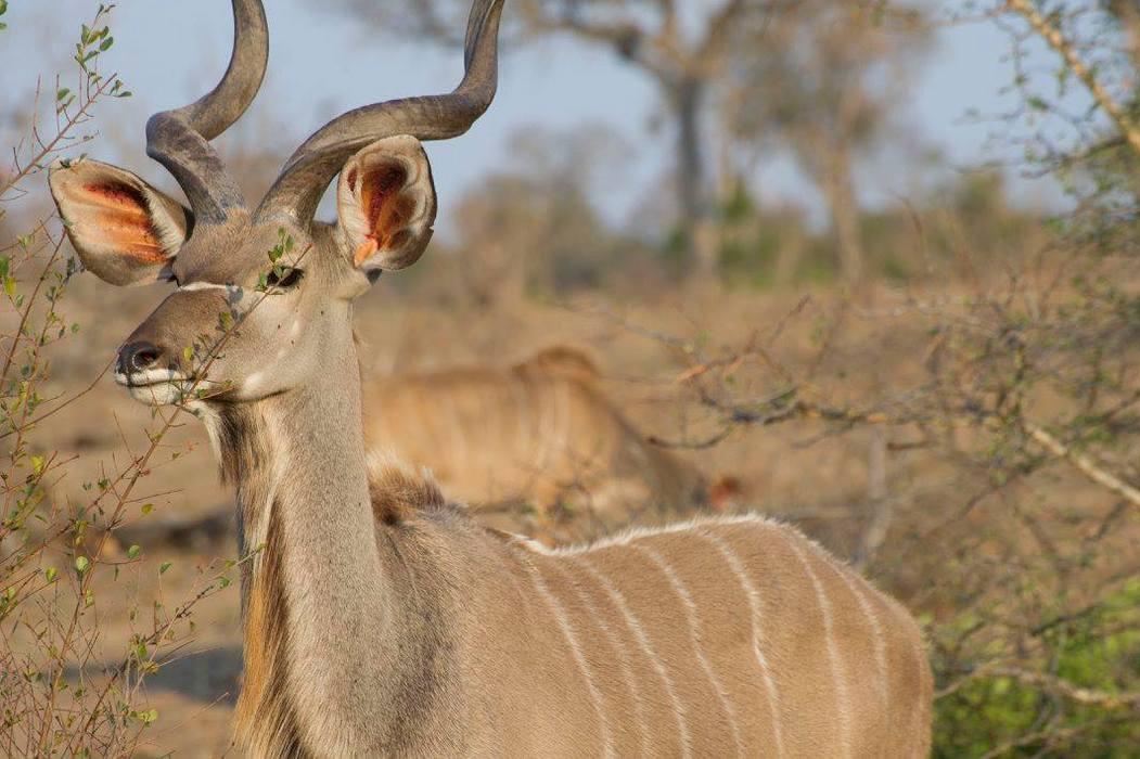 Photographers.travel Safaris