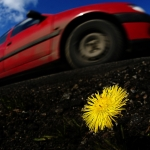 Colt's Foot and Red Car