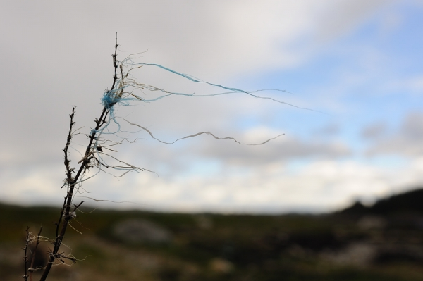 Plastic strips in the wind