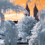Central Park (New York City)