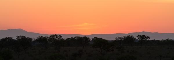 2012 Safari (Sabi Sabi)