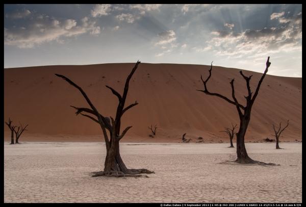 2013 Safari (Cape Town, Namaqualand, Namibia & Botswana)