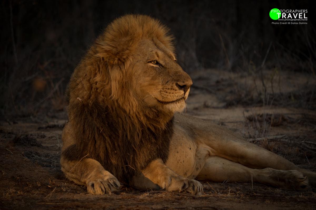 2016 Safari (Sabi Sabi)