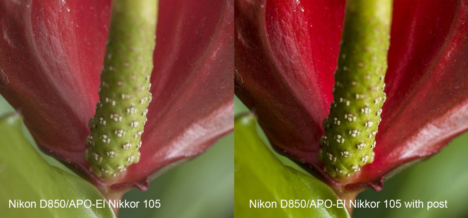 Nikon D850 Single Before-After.jpg