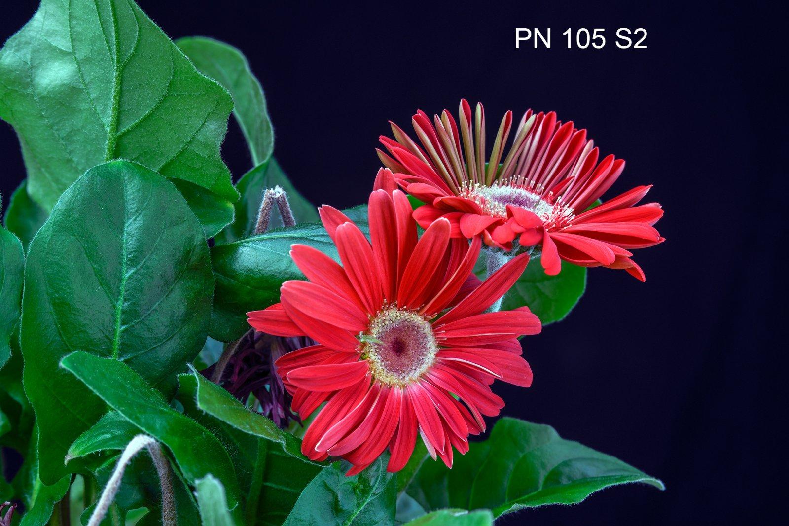 XLABEL_MEB8185-PN105-F11-.jpg