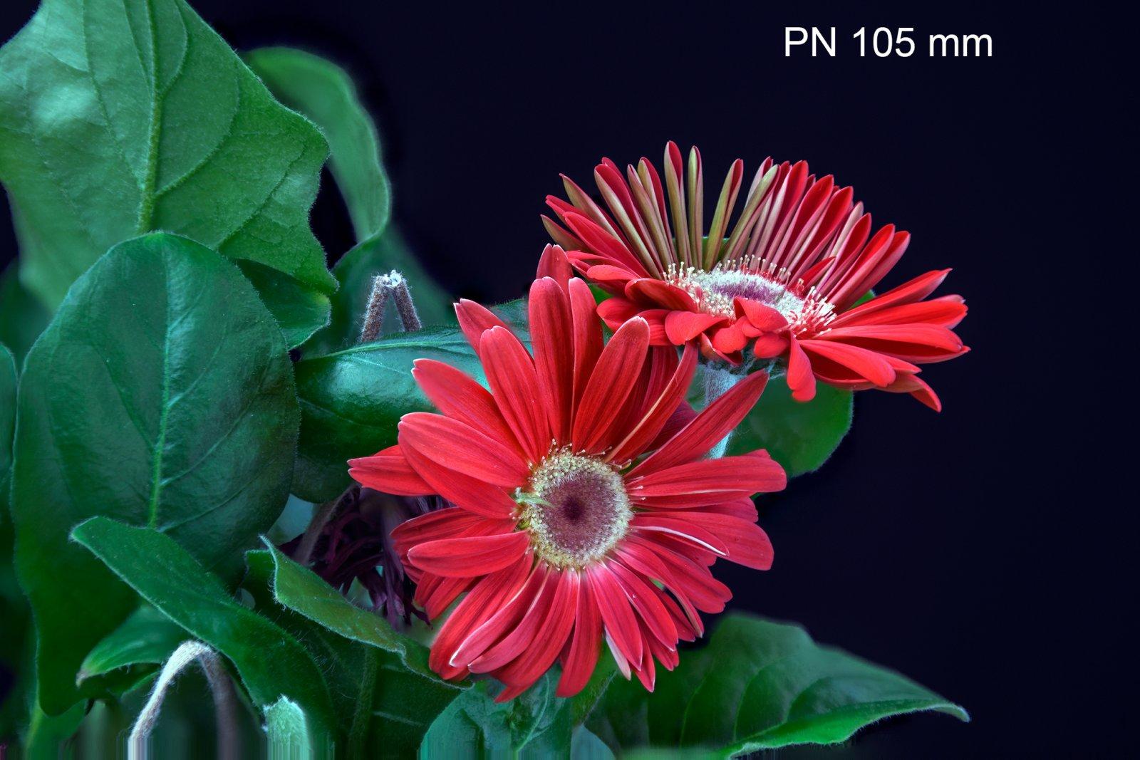 _MEB7927-2-PN105-Bellows-777.jpg