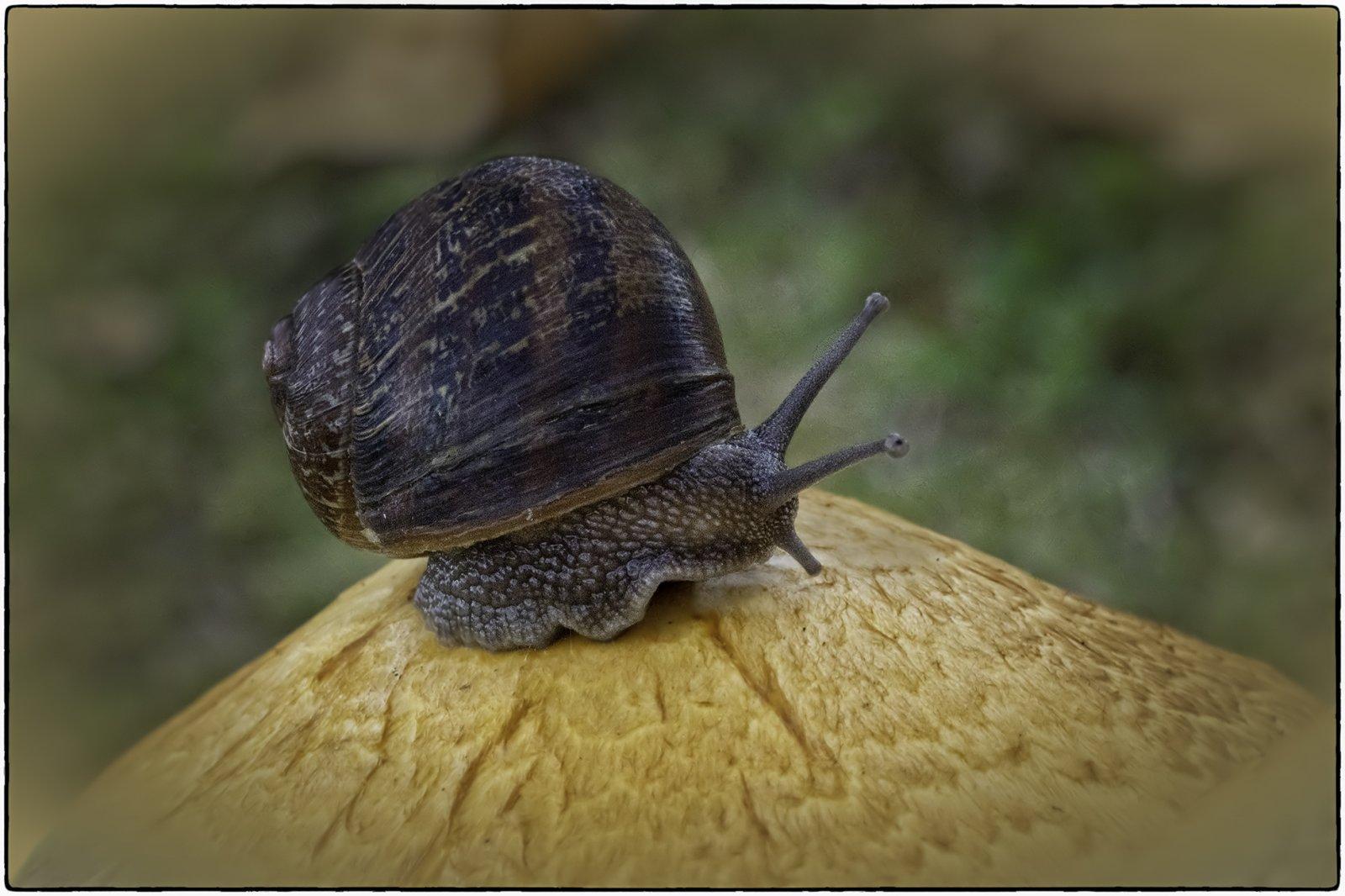 snail ul.jpg