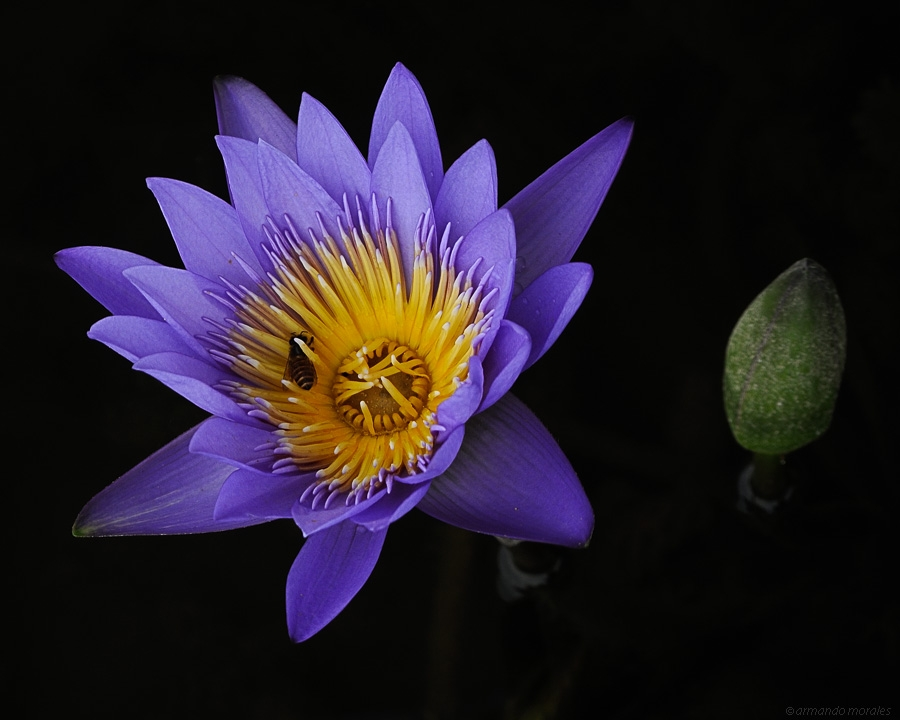 POTW #337 - armando_m Big blue flower