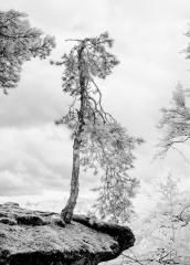 Trees in IR