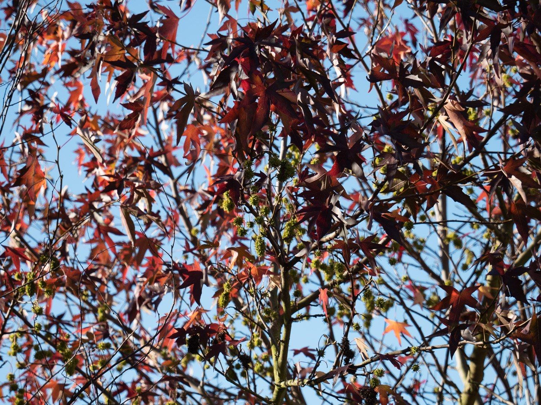 leaves.thumb.jpg.a0561e96b900f64a8da2c7c049b42dfc.jpg