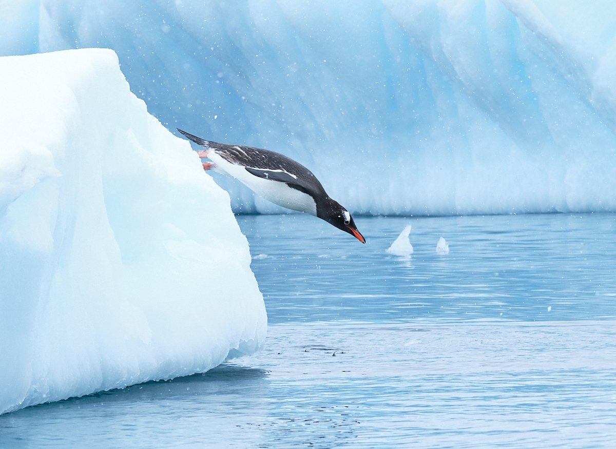 20190120_Antarctica_1676_C1.jpg