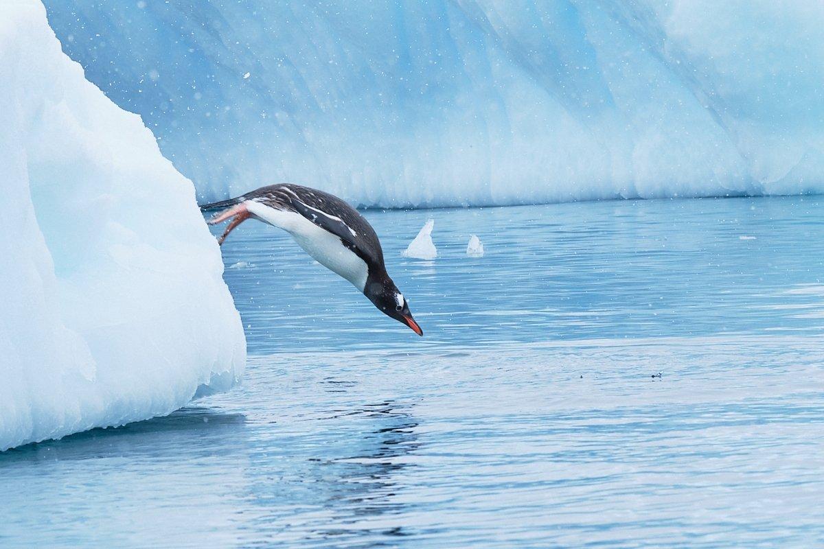 20190120_Antarctica_1677_C1.jpg