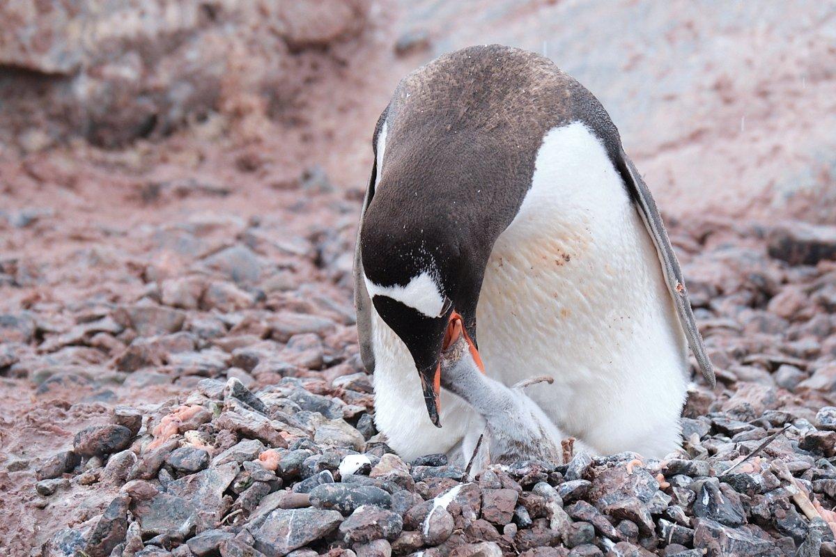20190120_Antarctica_2057_C1.jpg