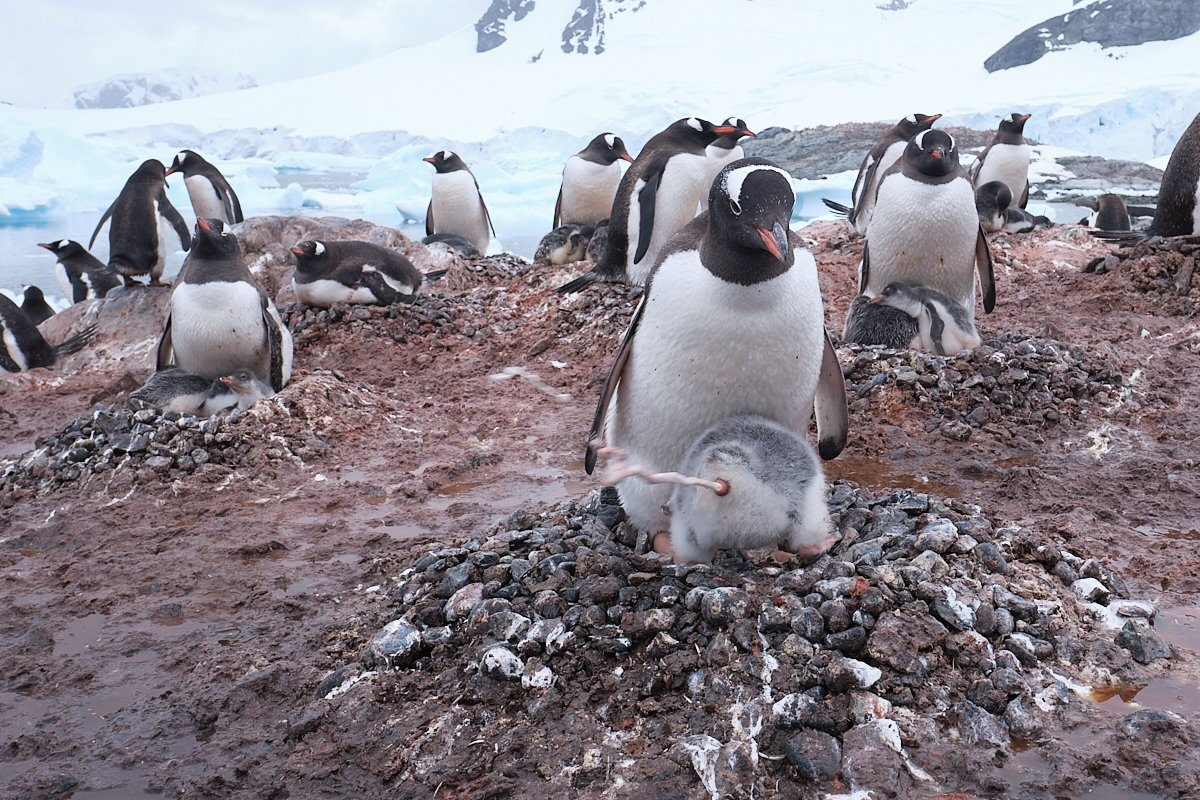 20190121_Antarctica_2552_C1.jpg