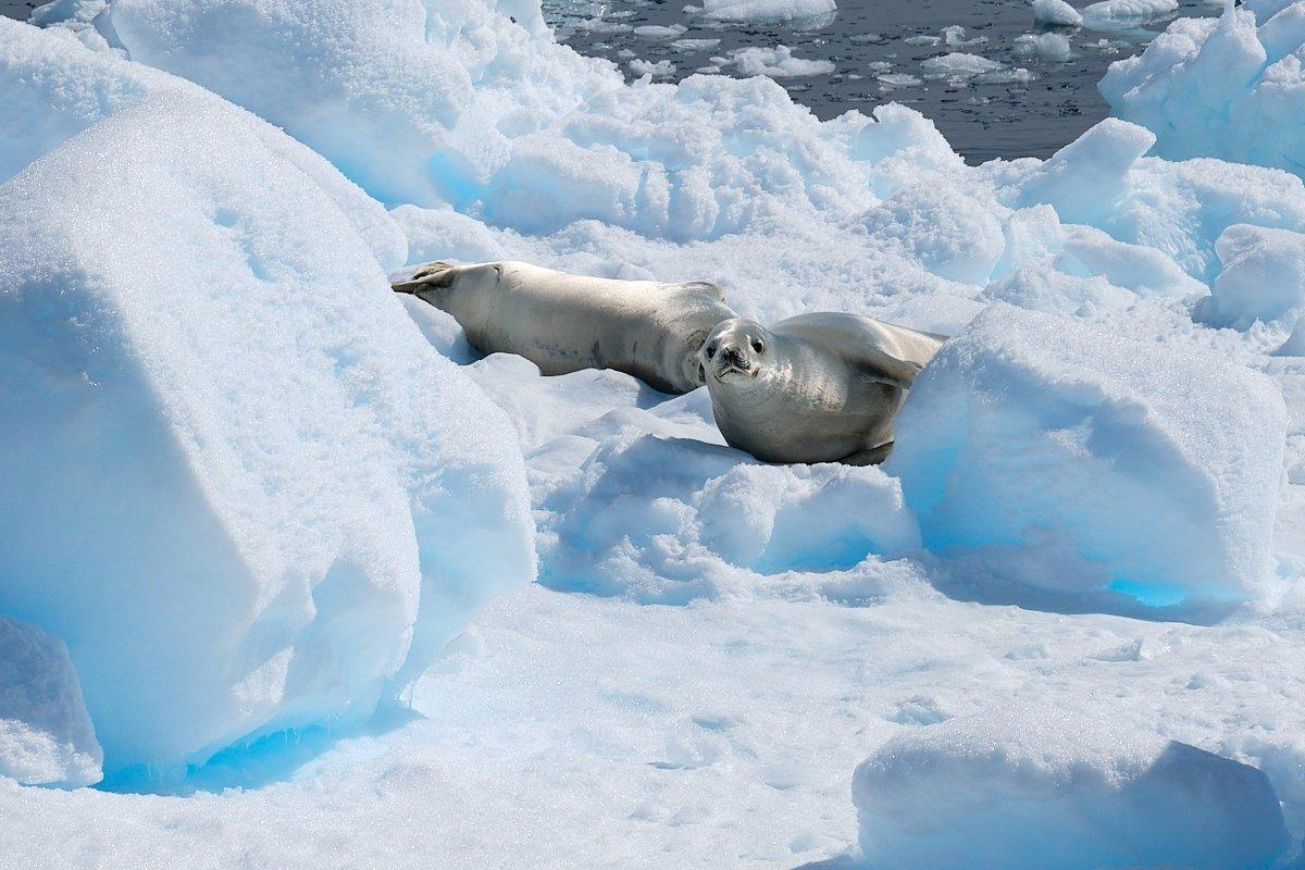 20190122_Antarctica_1436_C1.jpg