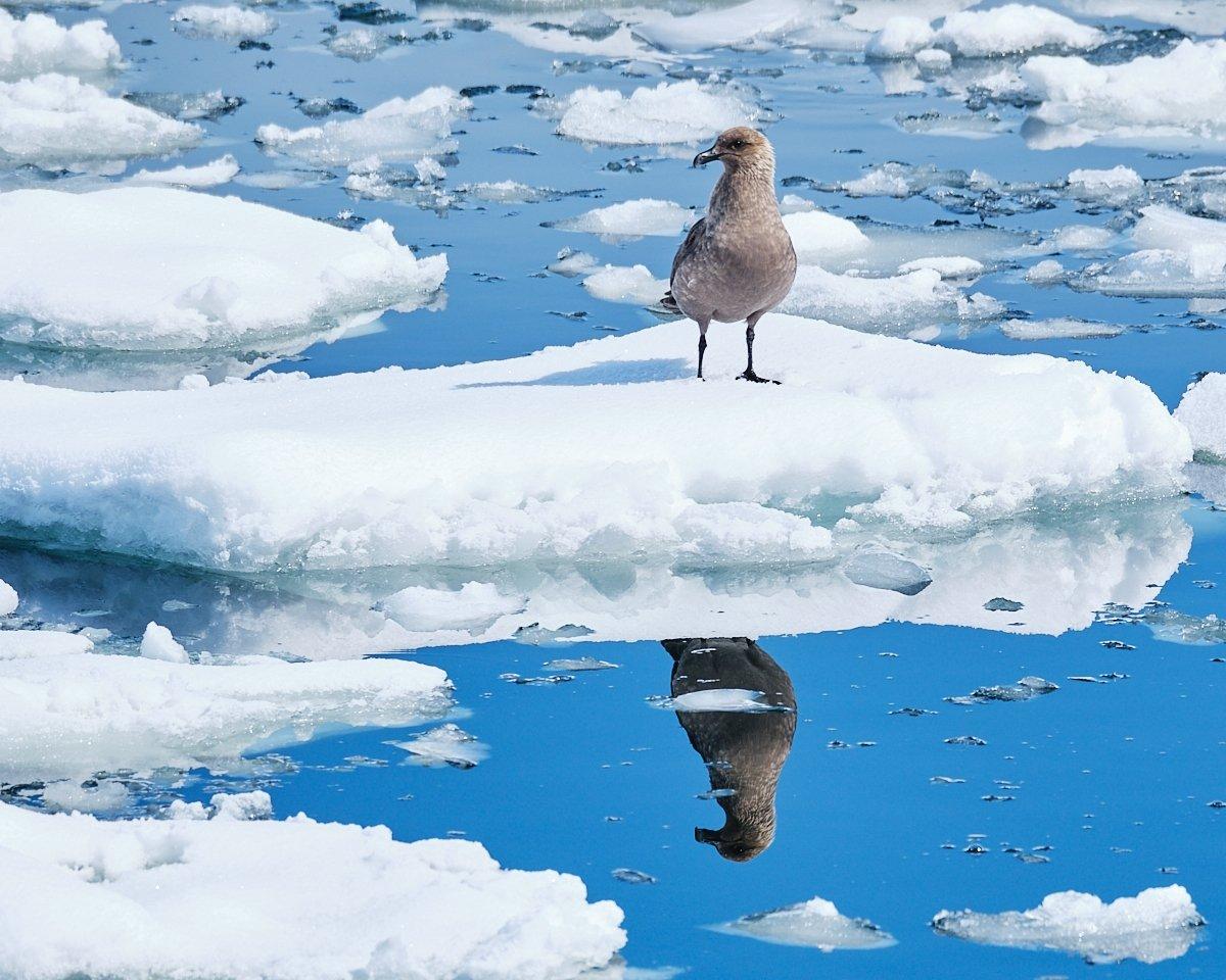 20190122_Antarctica_1613_C1.jpg