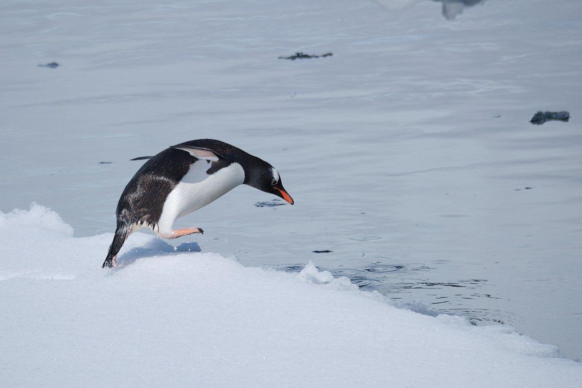 20190122_Antarctica_1695_C1.jpg