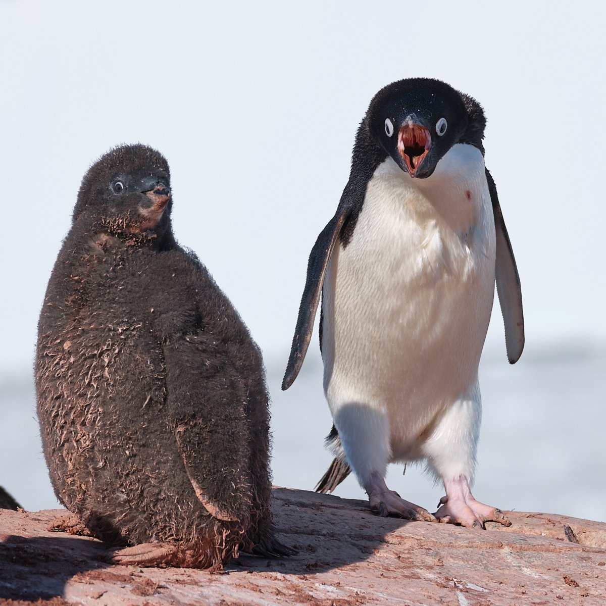 20190122_Antarctica_1861_C1.jpg