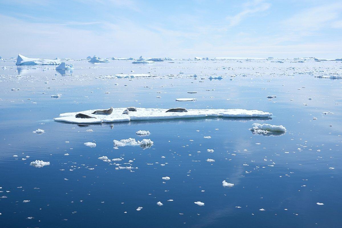 20190122_Antarctica_2808_C1.jpg