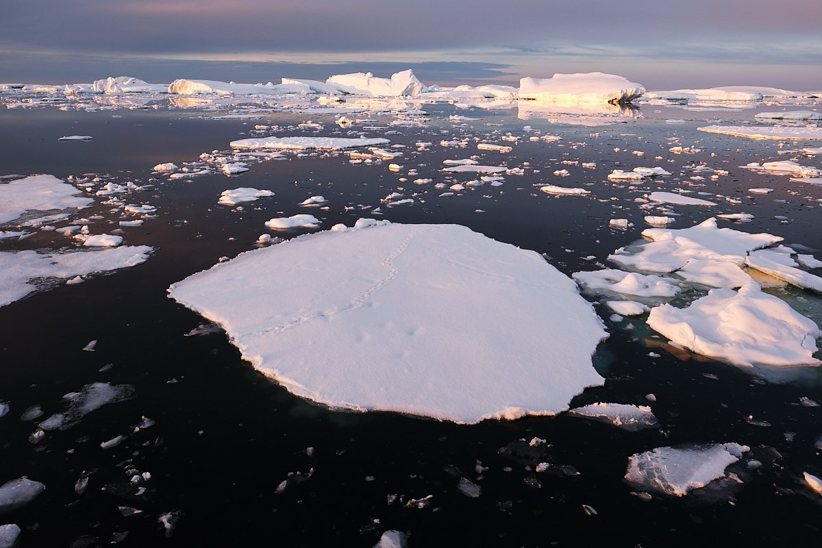 20190122_Antarctica_2879_C1.jpg