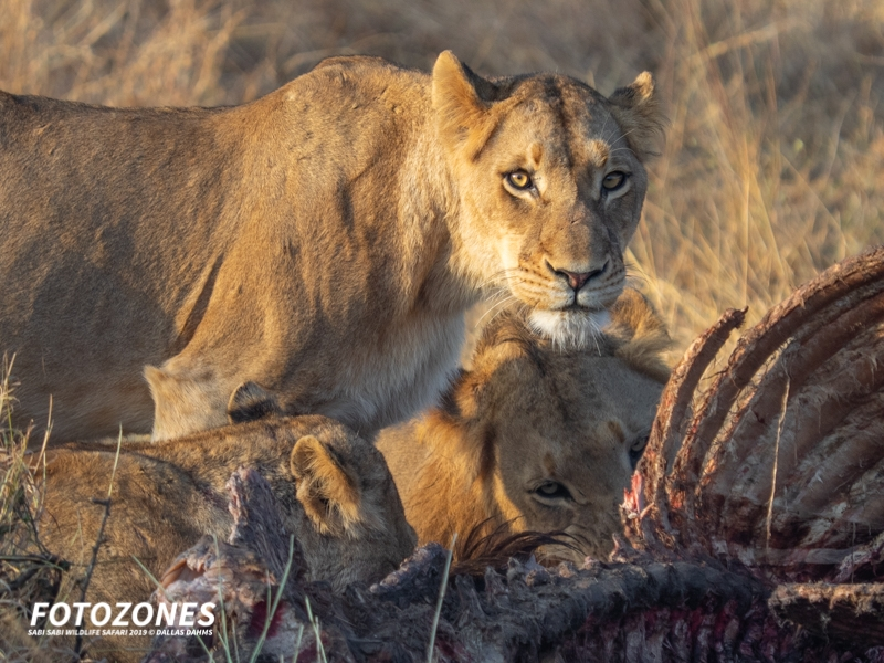 Gear, Pics & Stories From Fotozones Wildlife Safari 2019