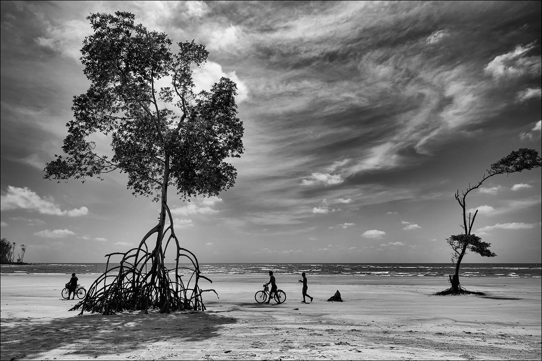 Sinister trees of Marajó Island