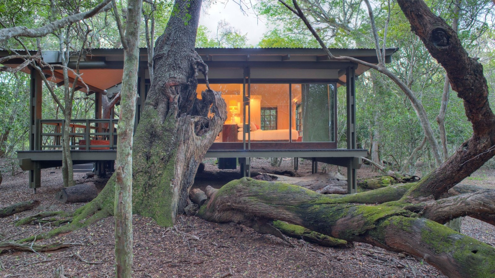 glass-suite-exterior-at-andbeyond-phinda-forest-lodge-on-a-luxury-safari-in-south-africa.jpg